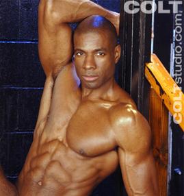 Gay Porn Star gayporn star Adam Dexter Black American Colt Gay Porn Star