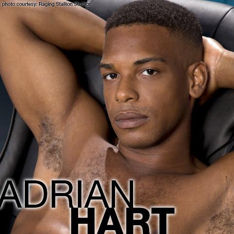 Adrian Hart Handsome Hung Black American Gay Porn Star 129594 gayporn star