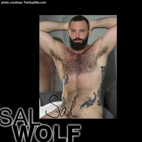 Sal Wolf American Muscle Gay Porn Guy Gay Porn 133881 gayporn star The Guy Site