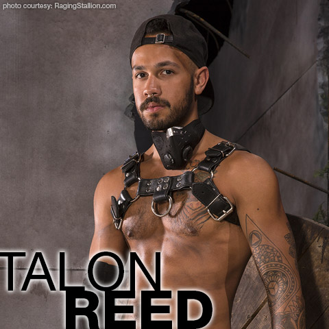 Talon Reed Raging Stallion American Gay Porn Star Gay Porn 134602 gayporn star